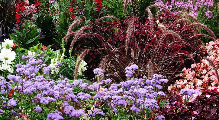 garden-show-Worcestershire